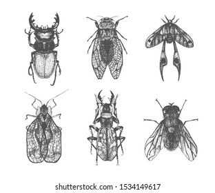 Set of several insects. Vector hand drawn illustration. Graphic butterfly, beetle, bug, dragonfly. Sketch style.