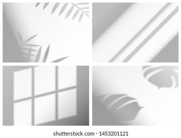 Set of shadow overlays for brand identity. Realistic mock up scenes. Transparent shadow of monstera and palm leaves. Vector illustration EPS10