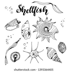 """Set with shellfishes, 7 shellfishes, 2 algae, the text """"shellfish"""", bubbles. Vector. Black outline on a white background, for coloring. For postcards, design, gift cards, decoration, decor, factories"""