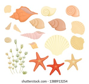 Set of shells. Summer concept with seashells and seaweed. Vector projectiles in cartoon style, isolated on white for design, vector illustration.