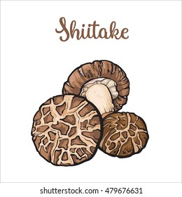 Set of shiitake edible mushrooms sketch style vector illustration isolated on white background. Collection of edible mushrooms shiitake