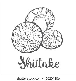 Set of shiitake edible mushrooms sketch style vector illustration isolated on white background.