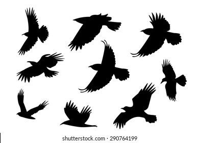 Set of silhouette flying raven bird with no leg. isolated on white background