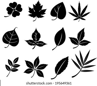 Set of silhouette natural leaves plant botany such as clover maple bodhi icon collection set, create by vector