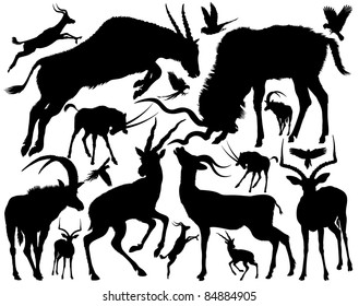 Set of silhouettes of a antelopes of a different appearance and the size on a white background.