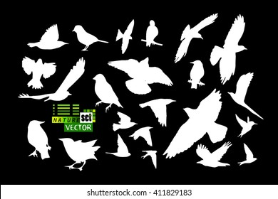 Set of silhouettes of birds. Vector