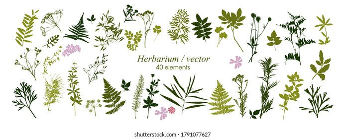 Set of silhouettes of botanical elements. Herbarium. Branches with leaves, herbs, wild plants. Garden and forest collection of leaves and grass. Vector illustration on white background