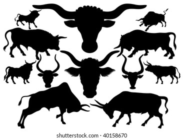 Set of silhouettes of a bull of a different appearance and the size on a white background
