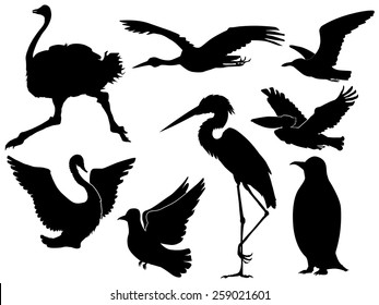 set of silhouettes of different birds