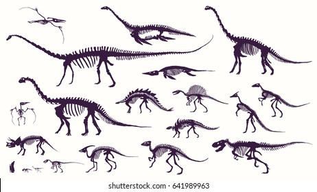 Set, silhouettes, dino skeletons, dinosaurs, fossils. Hand drawn vector illustration. Comparison of sizes, realistic Sketch collection: a, triceratops, tyrannosaurus, doodle pattern
