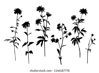 Set of silhouettes of flowers camomile, daisy, wild flowers, vector, black  color, isolated on white background