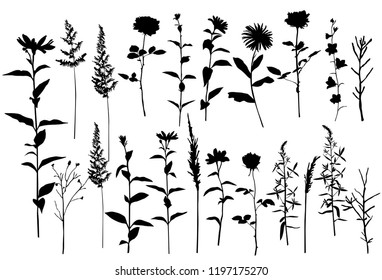 Set of silhouettes of flowers camomile, daisy, campanula, rose,  wild flowers, vector, black  color, isolated on white background