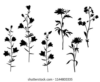 Set of silhouettes of flowers chamomile, daisy, campanula, wild flowers, vector, black  color, isolated on white background