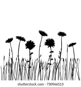 Set of silhouettes of flowers daisies, carnations, dandelions, field, grass, vector, black color, isolated on white background