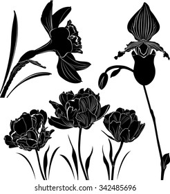 set of silhouettes of flowers isolated on white background