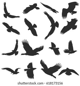 Set of silhouettes of flying birds. Separately isolated vector image on white background
