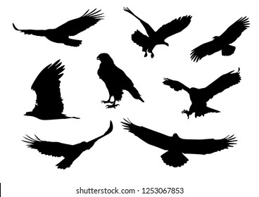 Set of silhouettes of Flying and sitting eagle in black in different poses isolated on a white background. High Detail. Vector Illustration.