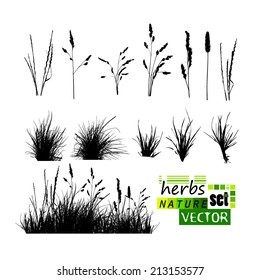 Set of silhouettes of herbs. Vector