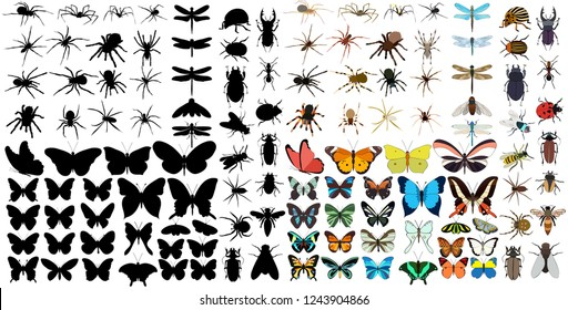 set of silhouettes of insects, spiders, butterflies, beetles