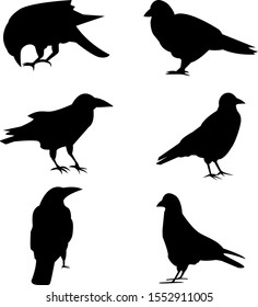 Set of silhouettes of raven and pigeons. Isolated images on a white background. Black outlines of birds for your design