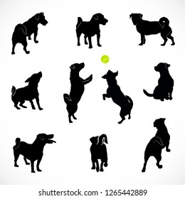 Set of Silhouettes of small active and calm dog Jack Russell Terrier. Rear, top and front view of the pet isolated on white background.