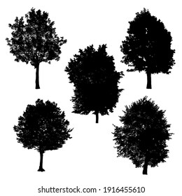 Set of silhouettes of trees on white background.
