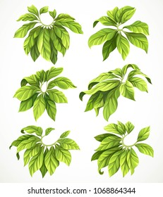Set of six big leaves of a tropical plant isolated on a white background