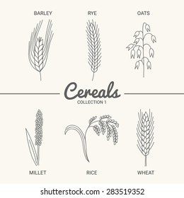 Set of six cereals. Barley, rye, oats, millet, rice and wheat in vintage style. Contour drawing vector illustration