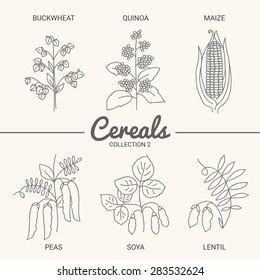 Set of six cereals. Buckwheat, quinoa, maize, peas, soya and lentil in vintage style. Contour drawing vector illustration