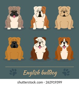 Set of six different colors English Bulldog