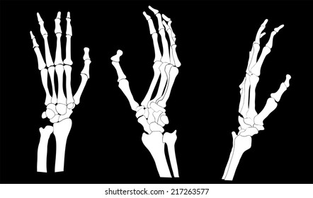 set of skeleton hands, vector illustration