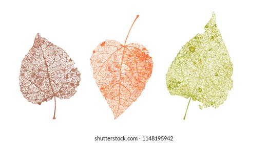 Set of skeletons leaves. Fallen foliage for autumn designs. Natural leaf of aspen and birch. Colored Vector illustration.