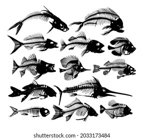A Set Skeletons of predatory sea fishes.