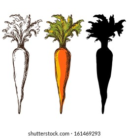 Set sketch carrots isolated - vector