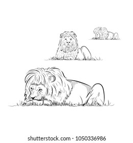 Set. Sketch of eating lions.