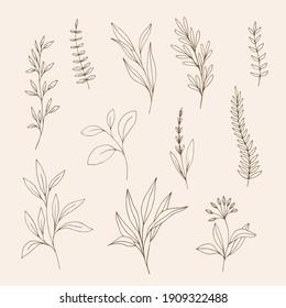 Set of sketch leaves. Trendy botanical illustration.