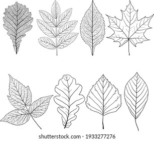 Set sketches silhouettes leaves on white background illustration