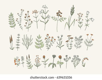 Set of sketchy hand drawn flowers. Vintage style field flowers and plants illustration collection. Creative vector floral elements for package of postcard decoration.