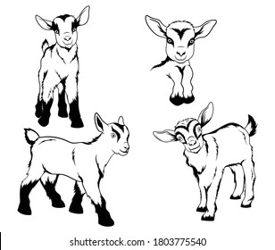 Set of small goats. Collection of decorative farm animals. Domestic farm animals. Vector illustration isolated on white background.