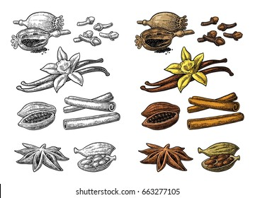 Set of spices. Anise star, cardamom, clove, cinnamon stick, fruits of cocoa beans, vanilla stick and flower, poppy heads and seeds. Color vintage engraving illustration isolated on white background