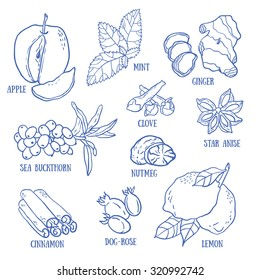 Set of spices, berries and fruits for autumn beverages. Vector hand drawn illustration.