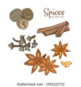 A set of spices - cinnamon, star anise, cloves, nutmeg. Vector sketch illustration.