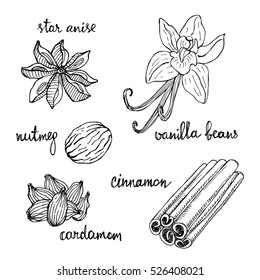 Set of spices: star anise, vanilla beans, nutmeg, cinnamon, cardamom. Hand drawn spices in sketchy style isolated on white background. Vector illustration.