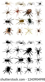 set, spider collection, sketch and silhouette on white background