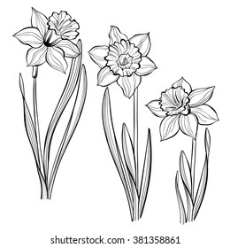Set of spring flowers daffodils isolated on white background.  Hand drawn vector illustration, sketch. Elements for design.