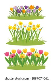 Set of spring flowers daffodils, tulips and crocuses growing in the form of lawns. Vector illustration, collection of elements for decoration