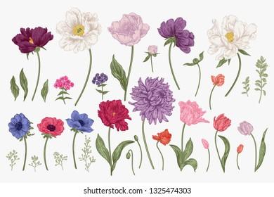 Set with spring flowers. Garden plants. Colorful.  Botanical vector illustration.