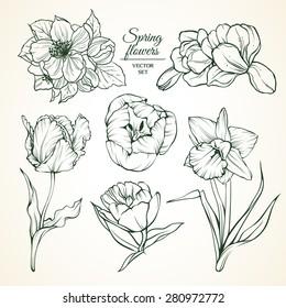 tulips sketch images stock photos vectors shutterstock