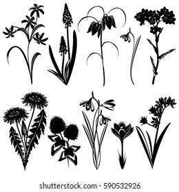 Set of spring flowers silhouettes (Forget-me-not, Star of Bethlehem, muscari, snowdrop, crocus, clover, dandelion, chequered lily, bluebell). Hand drawn vector illustrations on white background.