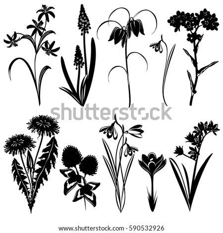 Set Spring Flowers Silhouettes Forgetmenot Star Stock Vektorgrafik